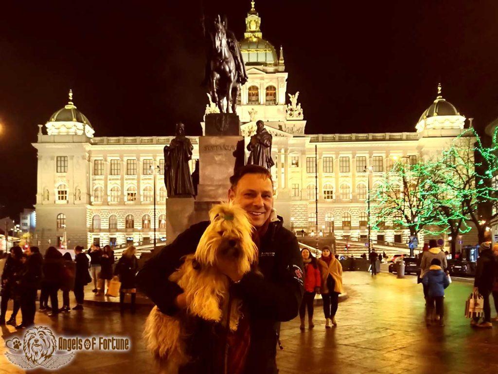 Bichette, Angels of Fortune, Havaneser, Hunde, Züchter, Berlin, Brandenburg, Deutschland, VDH, FCI, Welpen, Fotos, Bilder, niedlich, havanese, dogs, puppy, puppies, breeder, Germany, cute, photos, pictures, Prag, Dezember, 2019, Prague, December, 2019